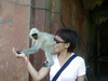 Langur Monkey in Agra