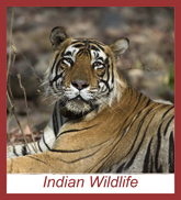 Tour of Wildlife in India