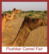 Pushkar Camel Fair Group Tour