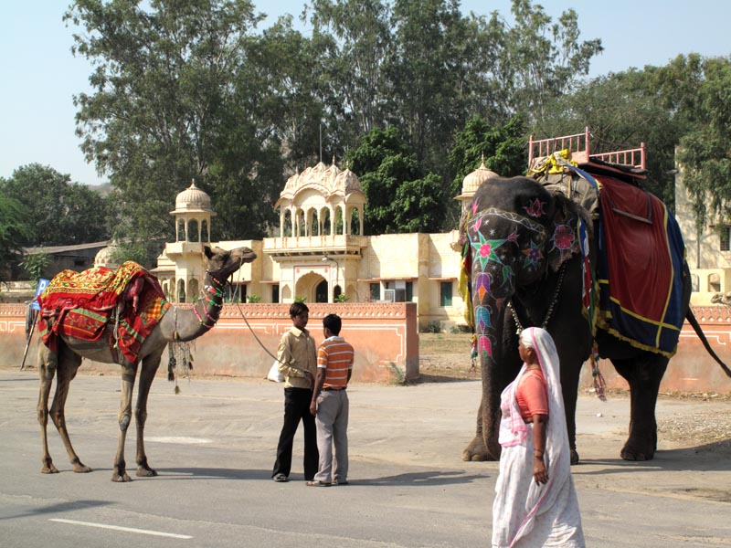 JaipurElephantCamel Our favourite places in India   Jaipur