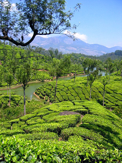 MunnarTeaPlantations Our favourite places in India – Munnar