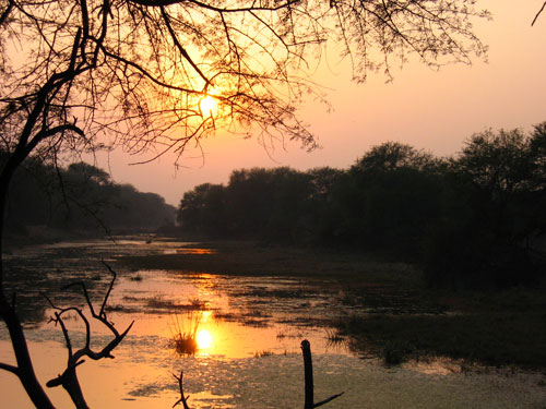 Keoladeo Sunset Bharatpur