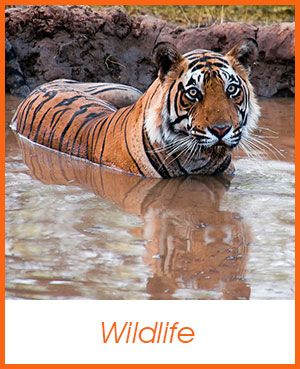 Wildlife Photo Gallery