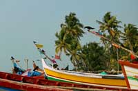 Cochin Fishing Boats