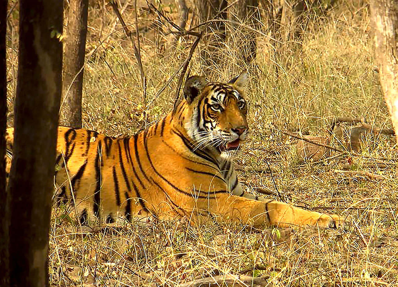 10 Ranthambore 6 Animal Policy