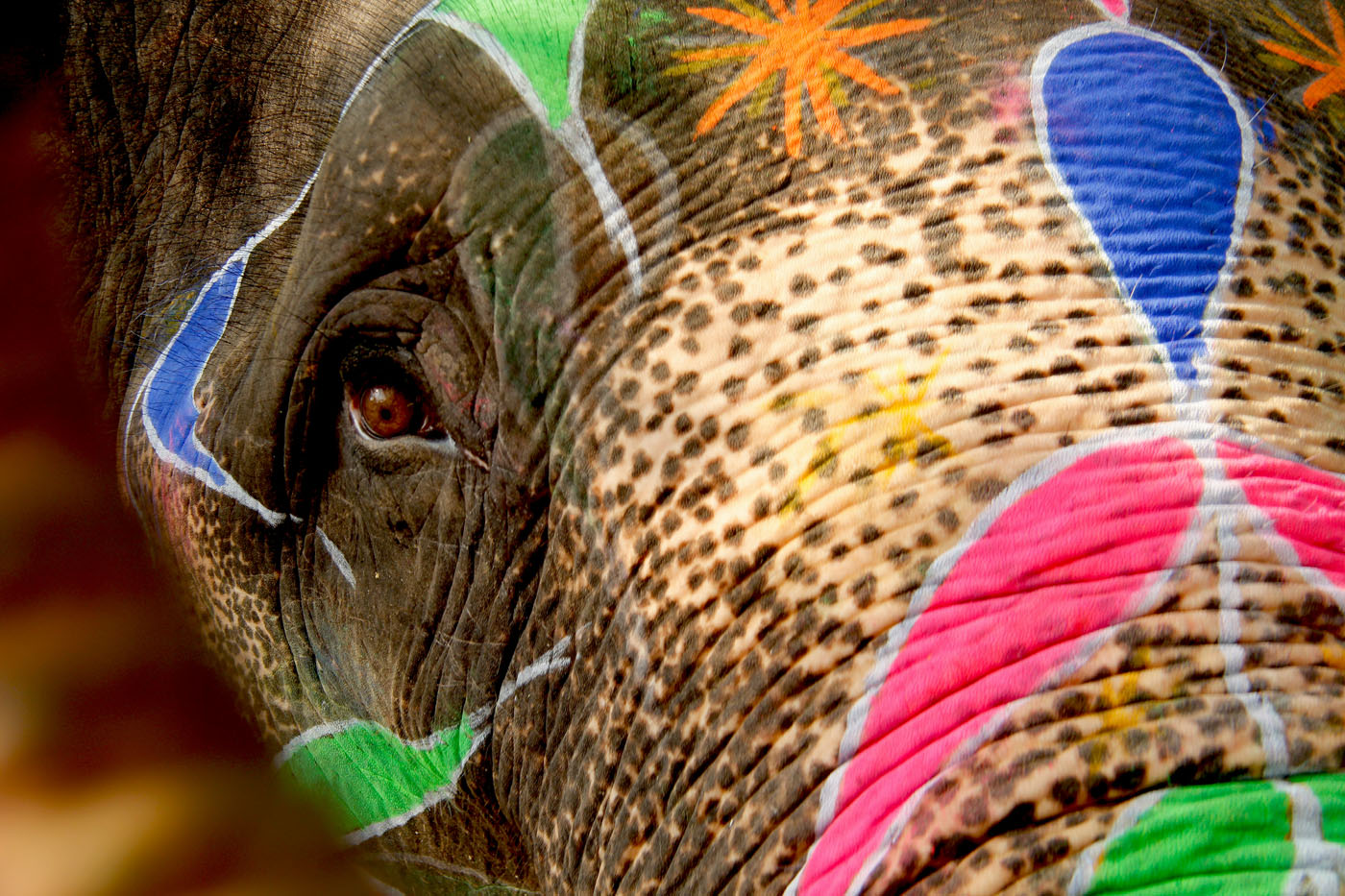 Jaipur Painted Elephant