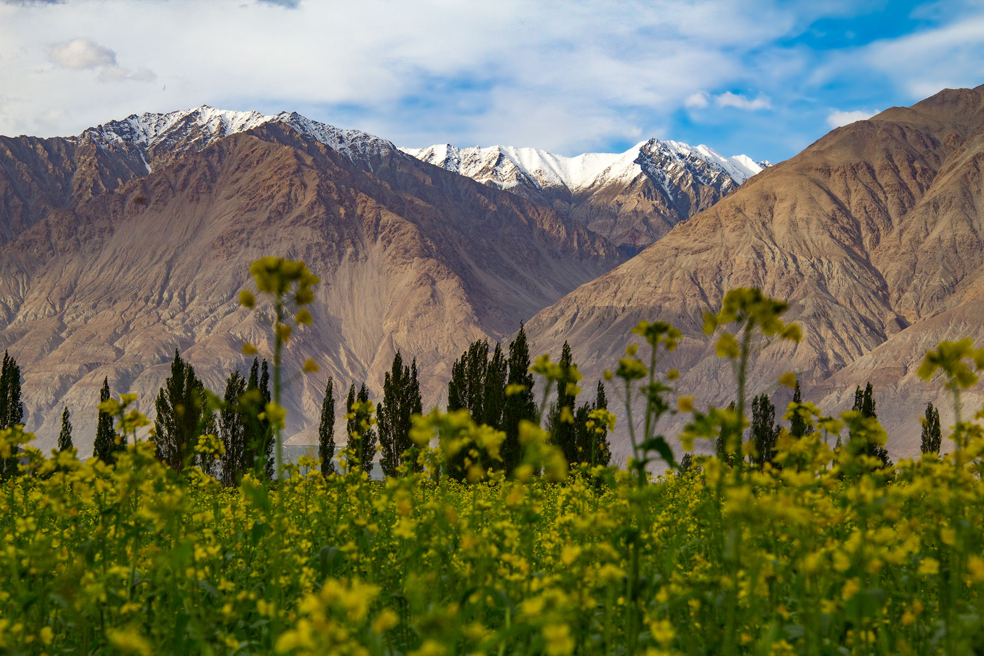 Snow caps surrounding Nubra Valley